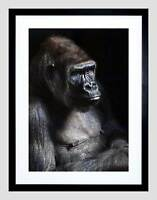 NATURE GORILLA APE BLACK MONKEY COOL BLACK FRAMED ART PRINT B12X4141