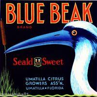 Umatilla Florida Blue Beak Bird Orange Citrus Fruit Crate Label Art Print