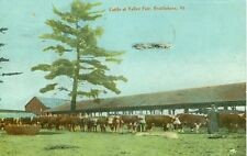 Brattleboro,Vt. 1909 view of Cattle at the Valley Fair