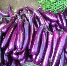 15x Riesen Lila Aubergine Samen Saatgut Neuheit Pflanze Gemüse essbar Neu