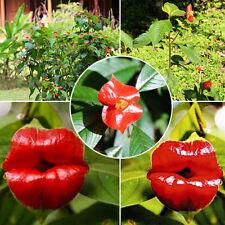 20pcs Sexy Red Lip Flower Seeds Garden Park Yard Plant Psychotria Elata Seed ca