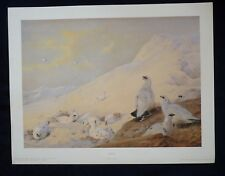 Archibald Thorburn Limited Edition Art Print Game Birds Sunrise Ptarmigan