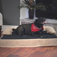 Petmaker Orthopedic Memory Foam Pet Bed with Bolster - Large