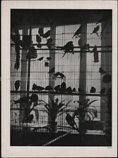 BRASSAI - BIRD CAGE * OFFSET LITHOGRAPH from VERVE 1937 very rare
