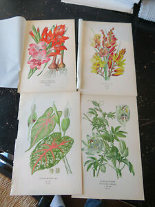 Passion Flower/Cal- Favorite Flowers of Garden & Greenhouse,London 1896 4 plates