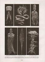 1911 Natural History Doble Costado Estampado ~ Flores Of The Sea / Maculata