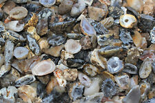 Bulk Oco Agate CLEARANCE Geodes 3 lb Lot,  90+ Pieces, Natural Crystal Druzy