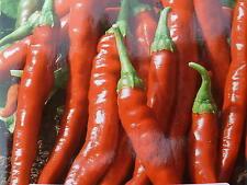 Graine  PIMENT DE CAYENNE  rouge  long seeds   40 graines samen semillas
