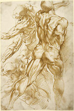 Peter Paul Rubens Drawings: Ecorche Nude Male Study - Fine Art Prints