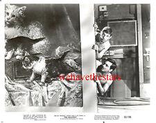 Vintage Leonard Nimoy Peter Falk BEEFCAKE '63 BALCONY Publicity Portrait GAY INT