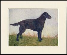 FLAT COATED RETRIEVER OLD TIME NAMED CHAMPION DOG PRINT MOUNTED READY TO FRAME