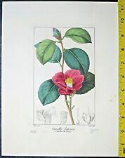 Bessa,P.Flore des Jardiniers,Camellia Japonica,handcol.Engraving,c.1836