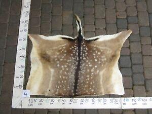 Fallow deer skin, tanned skin, fur, trophy, taxidermy, carpet, pelt