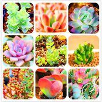 100Pcs/Bag Bonsai Seeds Mix Lithops Rare Succulent Flower Pseudotruncatella