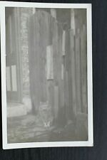Postcard Cat sat near Fence Outside House Door