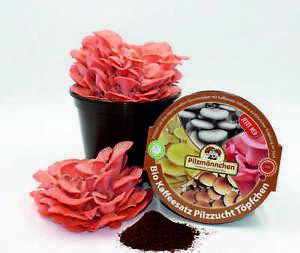 Rosenseitling Kaffeesatz Pilzzucht-Töpfchen Bio - Pilzzucht auf Kaffeesatz