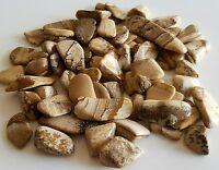 45-60 pcs Picture Jasper Tumbled 1/4 lb bulk stones