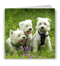 Pack of 6  Westies Birthday Cards - West Highland White Terrier Westie Dog