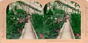 Tinted Stereo Card Interior Green House Kew Gardens B L Singley Excelsior 1895