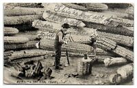 1912 Beating the Coal Trust Exaggeration Chopping Giant Corn Cobs Postcard
