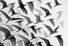 Framed Print - Black and White Flying Birds (Picture Pigeon Magpie Swallow Art)