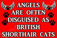 Angels Are Often Disguised As British Shorthair Cats Fridge Magnet Gift/Present