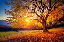 Autumn Warm Sunset - Tree In Field Brown Leaves Photo Poster / Canvas Pictures