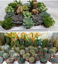 Set of 10 Mixed Plants ,5 cactus + 5 succelent  pots 5,5 cm