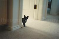 Kitten Peek FOUND PHOTO Color FREE SHIPPING Original Snapshot VINTAGE Cat 71283