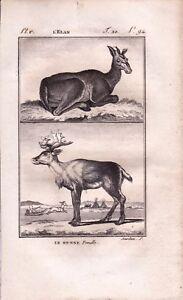 Gravure XVIIIe Elan Alces Buffon Cervidae Elger Renne Rangifer tarandus 1790