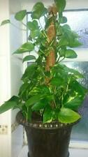 More details for moss pole 100cm coco coir house plant support totem indoor climbing plant