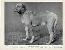 RHODESIAN RIDGEBACK NAMED DOG OLD ORIGINAL DOG PRINT FROM 1934