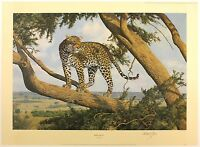 """ANTHONY GIBBS """"Mara Lookout"""" leopard tree LE SIGNED SIZE:52cm x 71cm NEW RARE"""