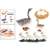 Groose Growth Cycle Plastic Life Cycle Animal Model Action Figures Biology Toy