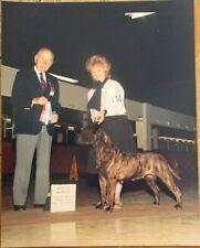 Mastiff / American Bullmastiff 1985 Champion Dog Show 8 x 10 Photograph / Photo