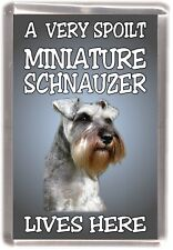 Miniature Schnauzer Fridge Magnet  A VERY SPOILT MINIATURE SCHNAUZER LIVES HERE