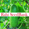 Hairy Gourd Fuzzy Melon A Rare & Delicious Asian Gourd Variety 10 Seeds