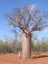 Seeds: 'WA Boab' & 2 types of 'Bottle Tree' seeds