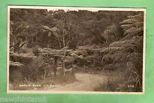 #A. Postcard - Native Bush, Titirangi, New Zealand