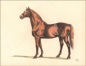 MAN O' WAR, Race Horse, hand colored vintage print, Jeanne Mellin, 1953