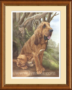 BLOODHOUND limited edition fine art dog print by Lynn Paterson
