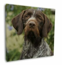 """German Wirehaired Pointer 12""""x12"""" Wall Art Canvas Decor, Picture Pr, AD-GWP1-C12"""