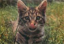 Postcard Animals Cat rocky tongue brown eyes big ear grass nature
