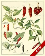 SPICES CHILI PEPPER PAPRIKA KITCHEN DRAWING PAINTING ART PRINT ON REAL CANVAS