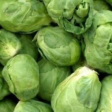 10 Brussels Sprouts Seeds