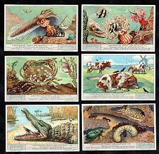 Symbiosis Animal Interdependence Liebig Cards Set 1933 Crab Fish Ant Beetle Bird