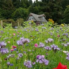 Honey Bee Wildflower Seed Mix 3000 Seeds 9 Grams Seeds No Filler All Seed Non GM