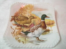 Vintage England Royal Adderley square Coaster ADD102 Mallard Ducks Game Birds