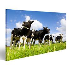 Bild auf Leinwand Holstein-Kühe auf der Wiese DNA-1P