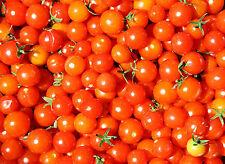 Tomate-tomberry tomates más pequeño del mundo -10 semillas más finos